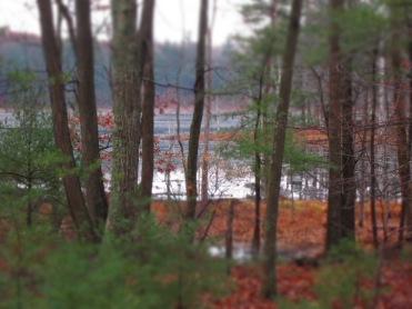 Hutchin's Pond