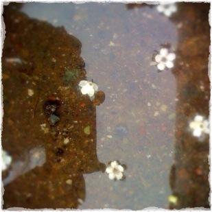 Photo 101: Water